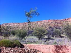 Alice Springs - Northern Territory