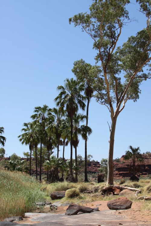 Palm Valley - NT