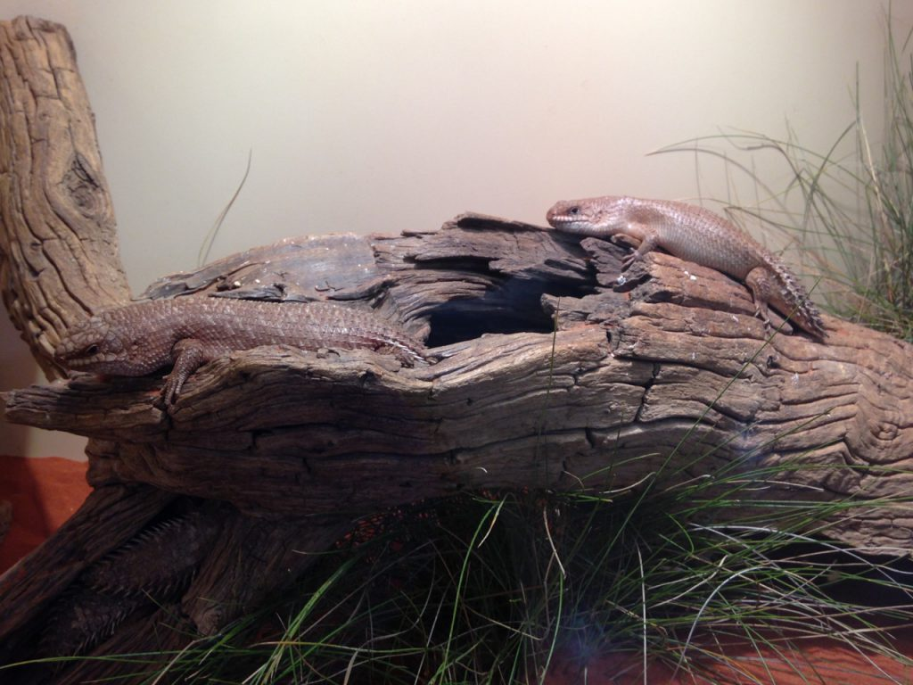 Reptile Centre - Alice Springs