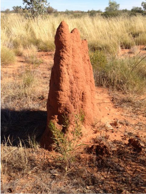 Termite Mound Tennant Creek