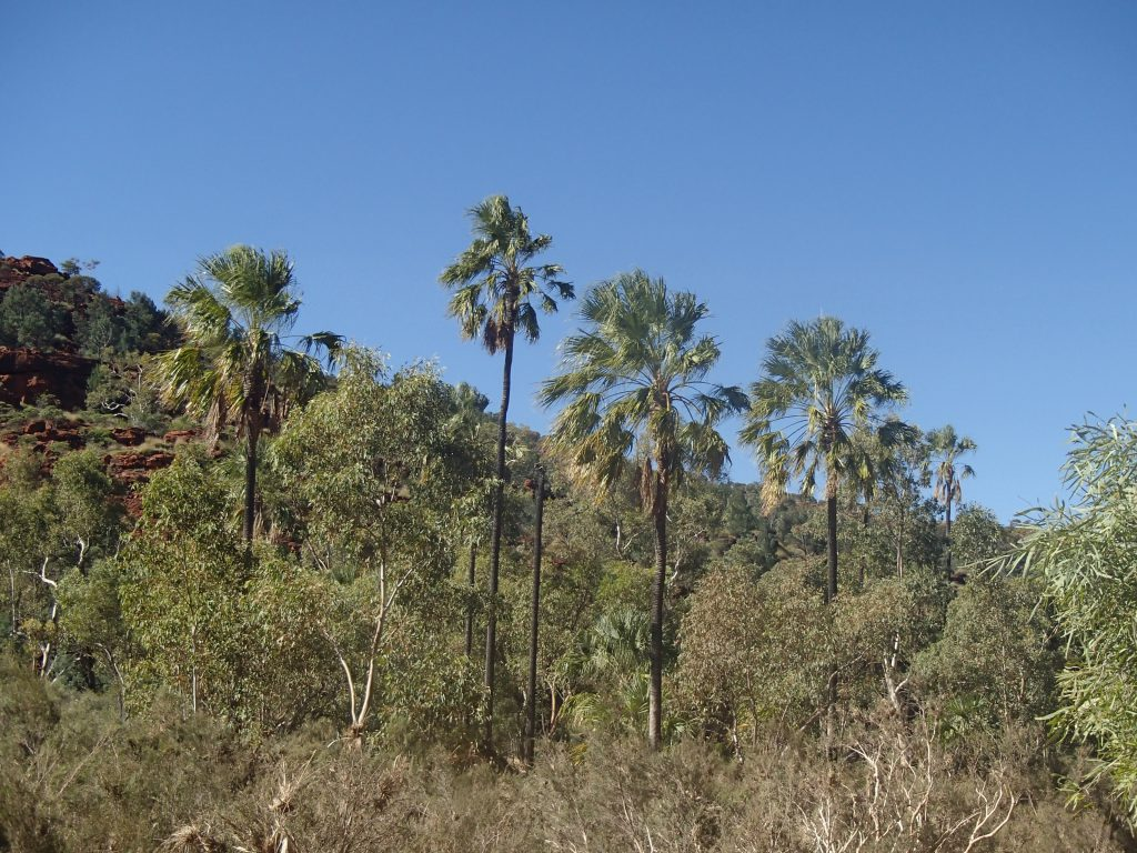 Palm Valley, Northern Territory